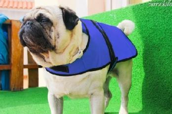 High Performance Cooling Coat for Dogs -Small